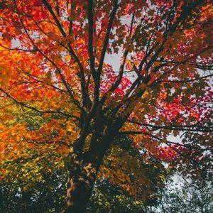 Bild von einem herbstlichen Baum mit farbigem Laub.