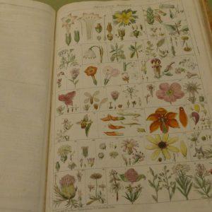 Altes Buch mit illustrierten Pflanzen auf der rechten Seite.